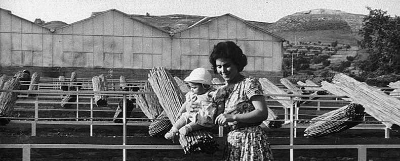 The Ciarrocchi little children grow up in the 60s in the new nurseries of Marche region